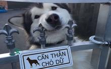 """Khổ thân 16 em chó đáng yêu bị gắn mác """"Cẩn thận chó dữ"""" oan ức"""