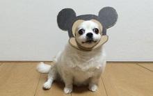 Bộ sưu tập đồ cosplay từ bìa các-tông có 1 0 2 của chú chó sống ảo