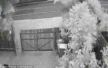 Clip bóng trắng hình đứa trẻ khiến cánh cổng đang đóng bỗng tự mở đầy rùng rợn