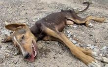 Chú chó sắp chết vì đói cố sức vẫy đuôi khi được cứu khiến người xem xót xa