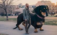 Bộ ảnh 50 sắc thái của chú chó khổng lồ dễ thương nhất trên đời
