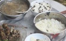 Kinh hãi nơi mâm cơm mới nấu chưa kịp che đậy ruồi nhặng đã đậu kín