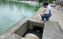 Hà Nội: Tảo chết nổi xanh hồ Văn Quán, người dân không dám hé cửa vì quá hôi thối