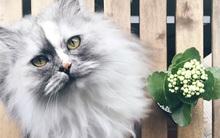 Có em mèo lông xù xinh thế này, chắc cả ngày ngồi ôm cũng không chán