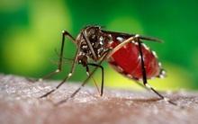 """Tìm ra khắc tinh lớn nhất của muỗi, khiến chúng """"cao chạy xa bay"""""""