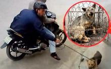 Trộm chó bất thành, quay sang đánh người dân nhập viện