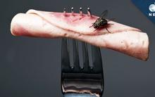 Chuyện khủng khiếp gì sẽ xảy ra khi ruồi đậu lên miếng thịt của bạn?