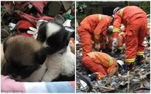 Giải cứu thành công chó mẹ mang thai và 9 chó con mắc kẹt trong đống đổ nát suốt 4 ngày