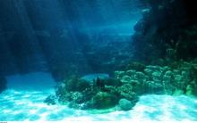 Riêng đại dương kỳ lạ này, nếu như biến mất thì cả thế giới sẽ chính thức sụp đổ