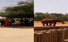 Chụp ảnh trước chuồng thú, cô bé 7 tuổi chết thảm vì bị voi ném đá vỡ đầu