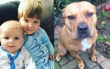 Anh: Mẹ liều mình chiến đấu với chó Bull hung dữ nhưng chỉ cứu được 1 trong 2 con