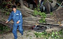 3 anh em ở Sài Gòn bỏ chạy khi cây bồ đề 15 m bật gốc