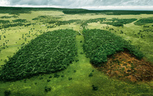 Tin mừng: Ít nhất thì tác động của con người đến thiên nhiên đang hạ nhiệt