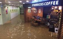 Ông chú Starbucks: Nước lũ có ngập tới rốn thì vẫn phải đọc xong tờ báo đã
