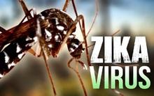 Những điều cần biết về virus Zika