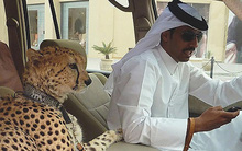 Ả Rập Saudi cấm người dân nuôi mãnh thú: Giới thượng lưu sẽ khoe giàu theo cách điên rồ nào nữa?