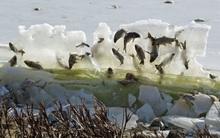 Cần lời giải thích cho hiện tượng cá đóng băng trên không trung vì quá lạnh