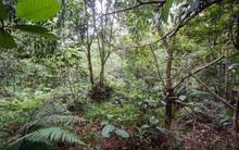 Đếm được trong rừng có bao nhiêu lính ngụy trang thì xứng đáng được triệu like