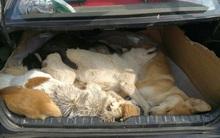 Thiếu nguồn cung, chủ quán lẩu dùng nỏ bắn chết 8 chú chó đem về làm đặc sản
