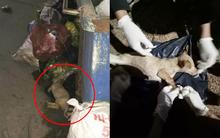 Chú chó bị gãy xương sống, nằm thoi thóp ở bãi rác được nhóm bạn trẻ cứu sống kịp thời