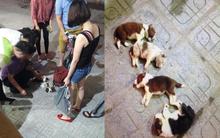 Xót xa trước cảnh 4 chú chó con lần lượt bị ném từ chung cư xuống đất