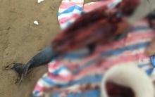 Chính quyền địa phương lên tiếng vụ cá heo vừa được cứu hôm trước, sáng hôm sau đã bị bắt làm thịt ở Đồ Sơn