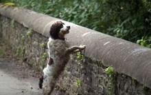 """Cây cầu """"ma ám"""", hầu hết những chú chó đi ngang qua đều lao xuống tự sát"""