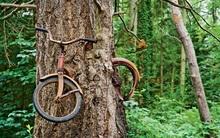 Cây xe đạp nổi tiếng ở Washington và câu chuyện ít người biết phía sau