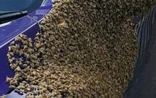 Người phụ nữ vắng nhà, khi trở về bà phát hiện đàn ong khổng lồ vây kín ô tô của mình