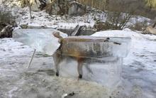 Bị nghi là giả, tác giả bức ảnh chú cáo đóng băng vì quá lạnh lên tiếng