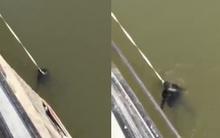 Thái Bình: Nam thanh niên cãi nhau với người yêu nhảy cầu tự tử ở cầu Vô Hối?