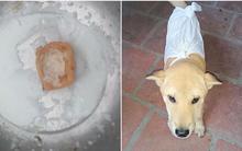 Ăn xương gà là hóc, ăn xương cá là nôn: Chú chó sang chảnh nhất Vịnh Bắc Bộ đây rồi!
