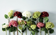 Chọn bông hoa yêu thích để khám phá vẻ đẹp tính cách của mình