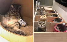 Mèo béo ăn tranh phần của con, chủ nhân đã nghĩ ra cách vô cùng vi diệu