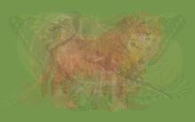 Bạn nhìn thấy con vật nào trong bức tranh ảo giác này, điều đó sẽ tiết lộ mẫu tri kỷ lý tưởng của bạn
