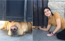 Chú chó nổi tiếng thế giới vì mỗi ngày đều nhòm qua khe cửa để chờ bạn thân tới vuốt ve