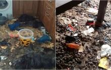 Video: Khung cảnh kinh hoàng bên trong căn nhà nơi 2 chú chó bị bỏ đói tới chết