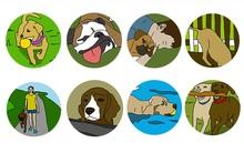 Đoán tính cách của chó cưng qua hoạt động yêu thích của chúng