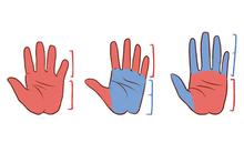 Đo chiều dài ngón tay và lòng bàn tay để khám phá phong cách làm việc của mỗi người