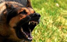 5 mẹo hữu ích cần ghi nhớ khi bị chó tấn công bất ngờ