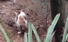 Phản ứng không ngờ của chú mèo khi gặp chuột khiến người xem bật cười