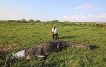 Giây phút cá sấu khổng lồ chuẩn bị nuốt chửng lấy người đàn ông