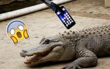 Thử nghiệm điên rồ: Cho cá sấu nhai iPhone 7!