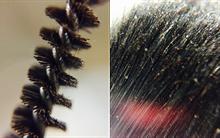 Bộ ảnh này sẽ cho bạn biết độ bẩn khủng khiếp của cọ trang điểm bạn dùng mỗi ngày