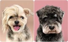 Giải mã thói quen ai yêu chó cũng làm mỗi khi nhìn thấy chó con