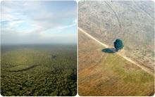 Ngắm nhìn vẻ đẹp quê hương của trăn Anaconda, và cái cách con người đã phá hủy nó
