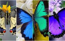Bạn thích con bướm nào nhất, nó sẽ tiết lộ tính cách ẩn sâu trong bạn