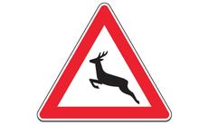 Xem tấm biển báo hình con hươu để khám phá điểm tốt của bản thân