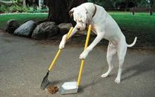 """Có thể bạn chưa biết: Có những người đang kiếm được hàng triệu đô từ... """"chất thải của chó"""""""