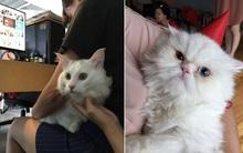 Công ty đáng yêu nhất vịnh Bắc Bộ: Sếp cho nhân viên mang thú cưng đến văn phòng, tổ chức sinh nhật cho mèo như thật!